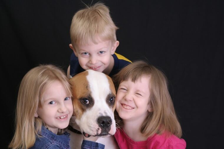 Buying a Dog as a Friend to the Children